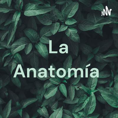 La Anatomía ❤️