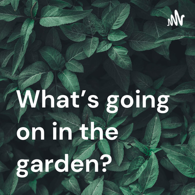 What's going on in the garden?