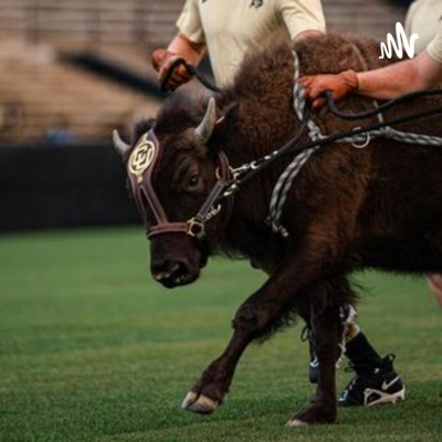 Notes on CU Football for the 2021 season