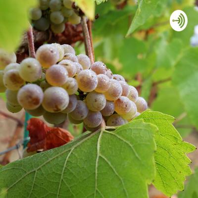 Wine by La Petite Nénette