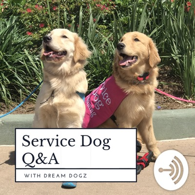 Service Dog Q&A with Dream Dogz