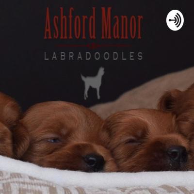 Ashford Manor Labradoodles