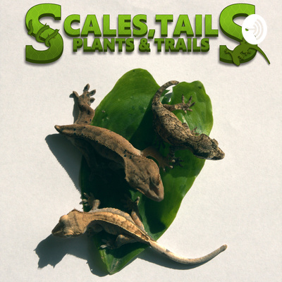 Scales, tails, plants and trails