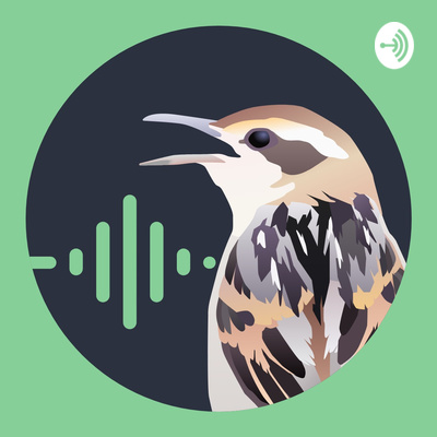 Batebico Podcast