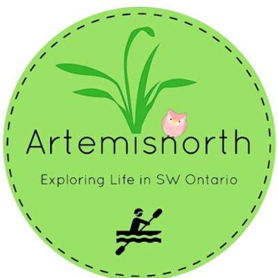 artemisnorth