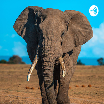 The Elephants Trail Project