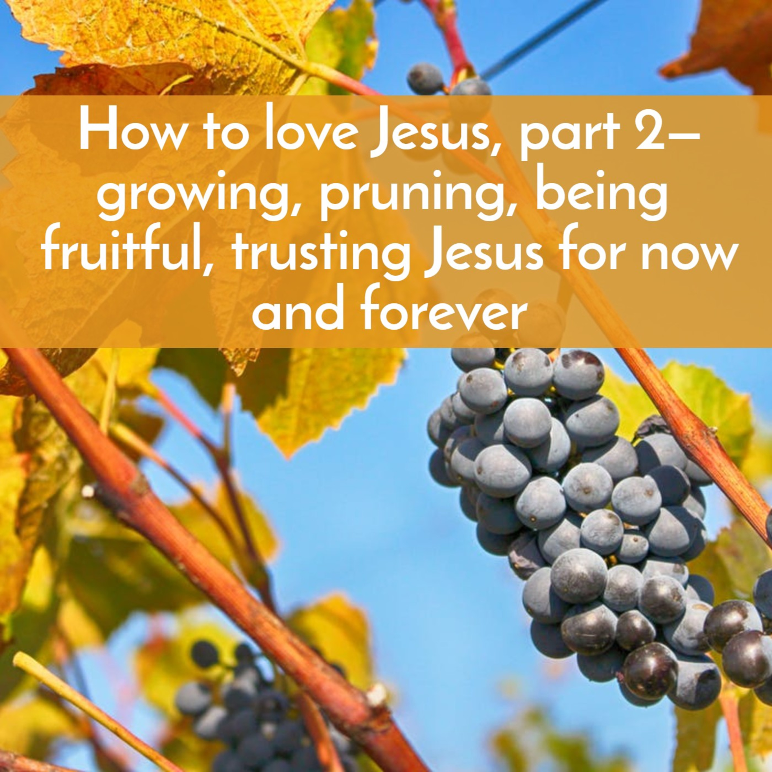 How to love Jesus, part 2—growing, pruning, being fruitful, trusting Jesus for now and forever