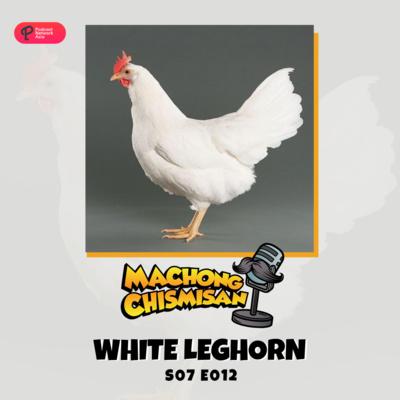 Machong Chismisan - S07E11- White Leghorn