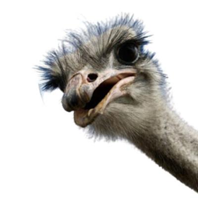 Machong Chismisan - S07E12- Ostrich