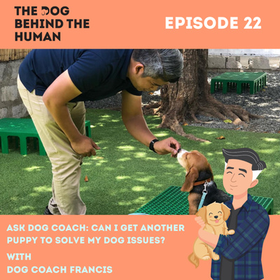 Ep. 22: Ask Dog Coach: Can I Get Another Puppy To Solve My Dog Issues?