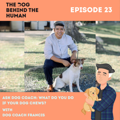 Ep. 23: Ask Dog Coach: What Do You Do If Your Dog Chews?