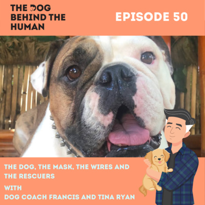 Ep. 50: The Dog, The Mask, The Wires and the Rescuers