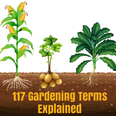 117 Gardening Terms Explained by The Green Blog Podcast