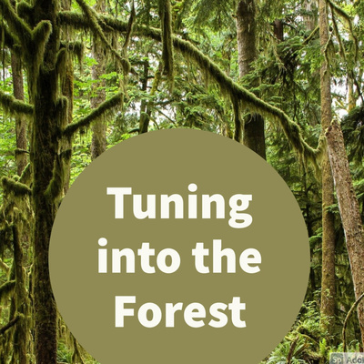 Tuning into the Forest