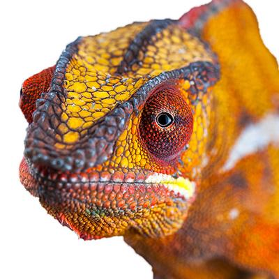 Old Desert Lizard's Tech Talk