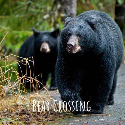 Bear Crossing: A Community Conversation