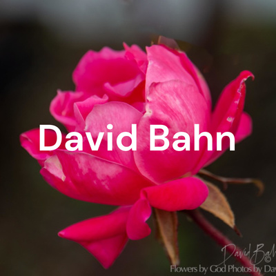 David Bahn - Reflections