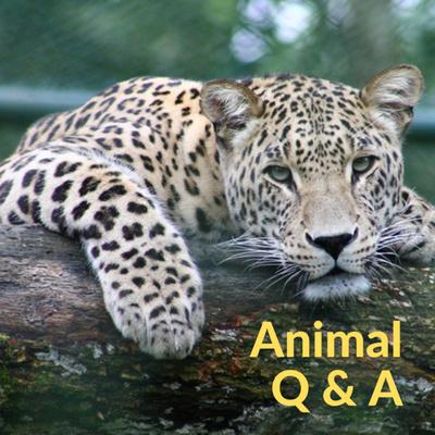 Animal Q&A