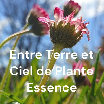Entre Terre et Ciel de Plante Essence
