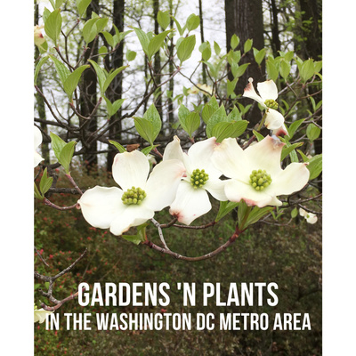 Gardens 'n Plants
