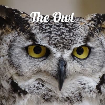 The Owl Newspaper: Observe. Write. Lead.