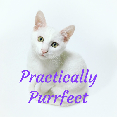 Practically Purrfect