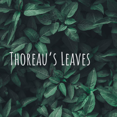 Thoreau's Leaves: the Thoreau podcast