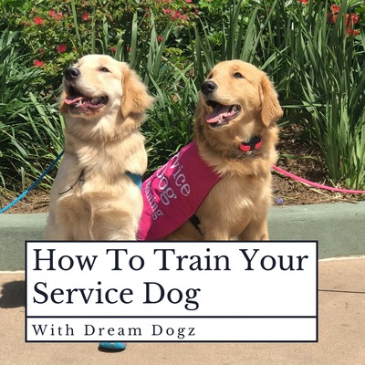 How To Train Your Service Dog (With Dream Dogz)