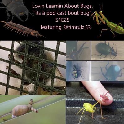 Lovin' Learnin' About Bugs