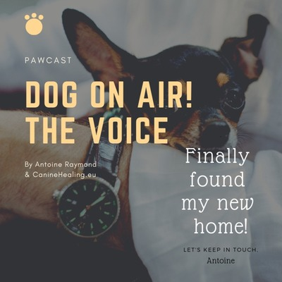 Dog On Air