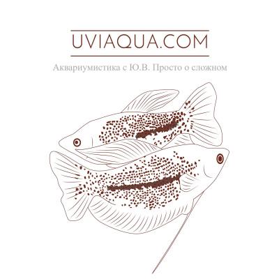 UViAQUA.com