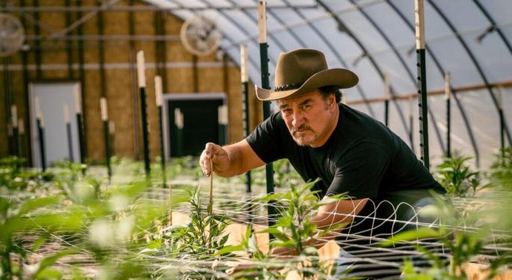 "Belushi's Farm – Yep, that ""Belushi"" is Not Only an Actor, Activist, Singer & Dancer, but Also an Amazing Cannabis Grower"
