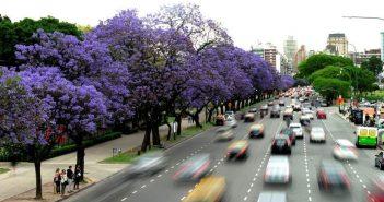 Llega noviembre y la ciudad se tiñe de violeta