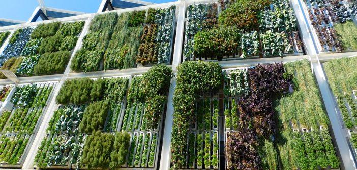 Los 4 beneficios de tener un jardin vertical en tu casa