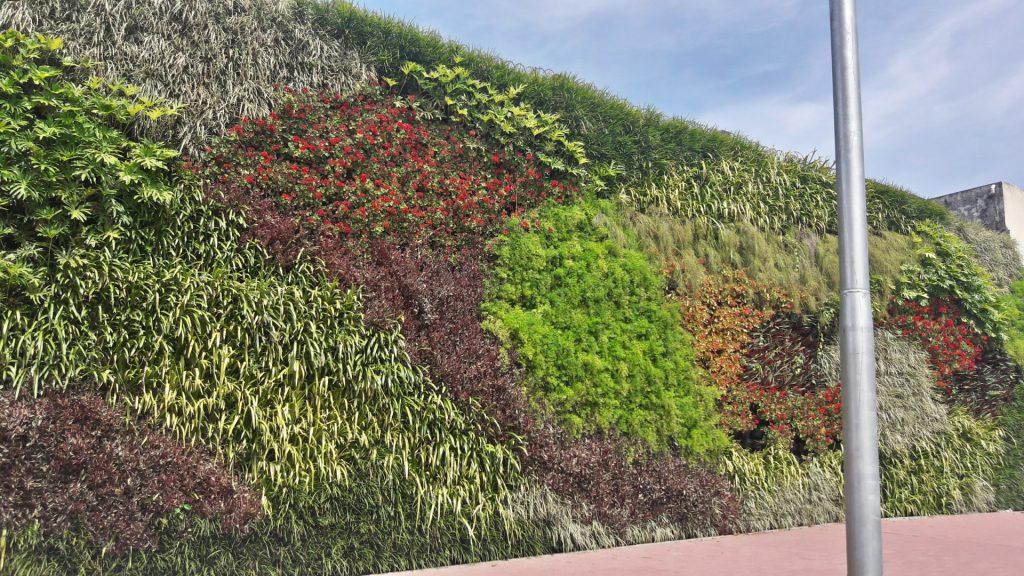 Jardínes verticales