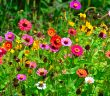 5 tips para cuidar plantas de exterior