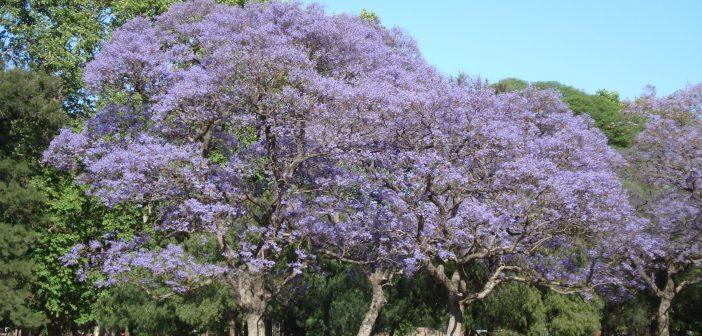 7 lugares de Buenos Aires para visitar en Primavera