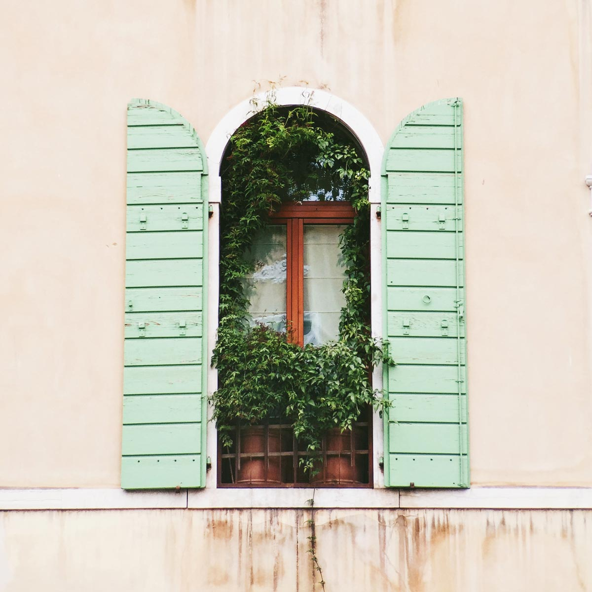 Photo by Julia Machik of ivy growing in a beautiful Italian window