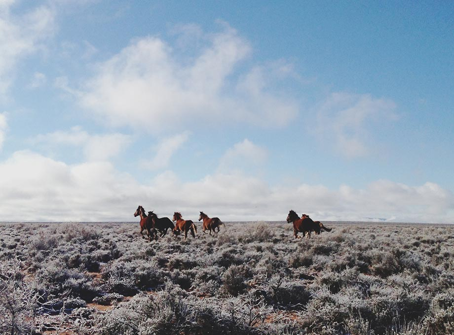 Wild horses galloping in an open field