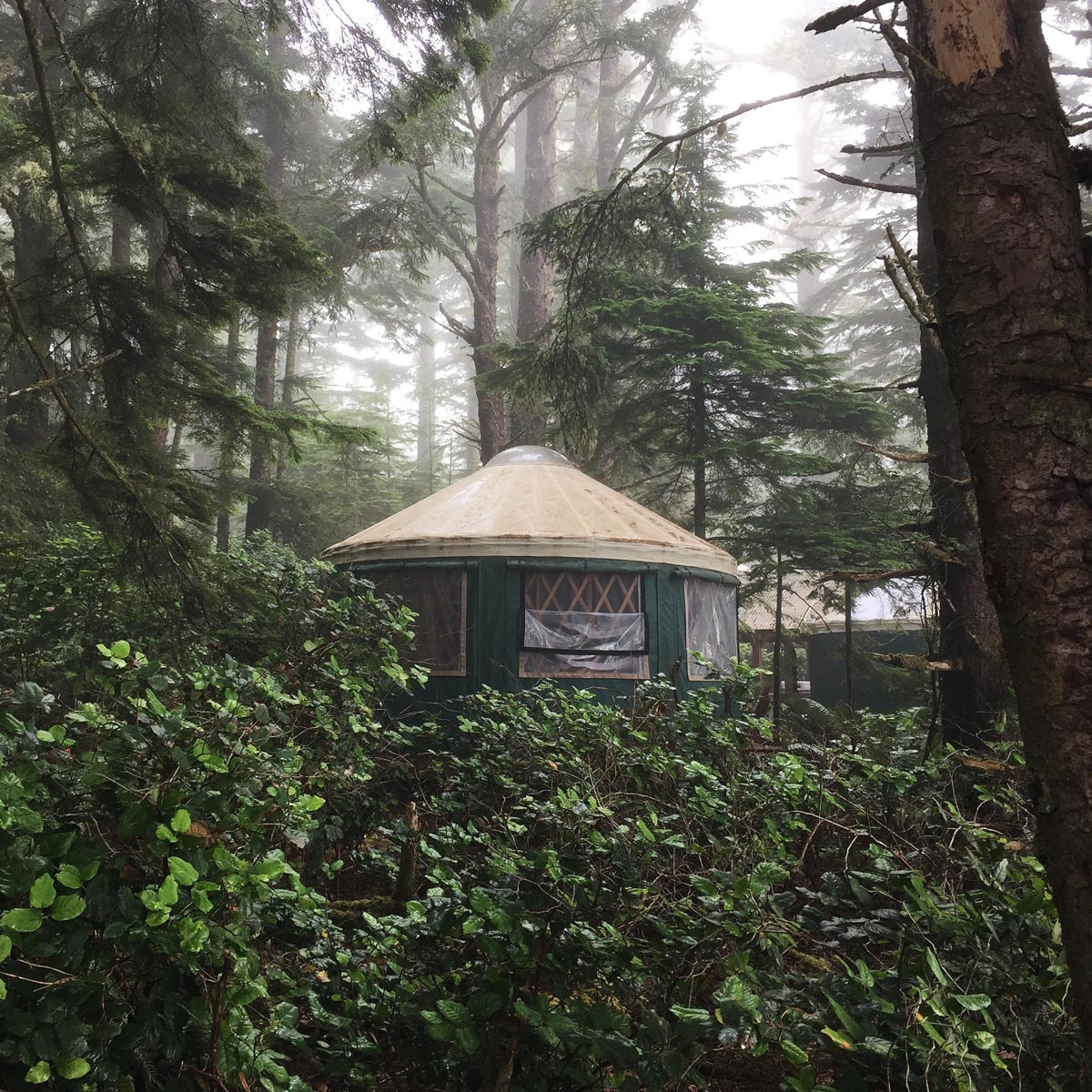 A hut in a rainy forest setting