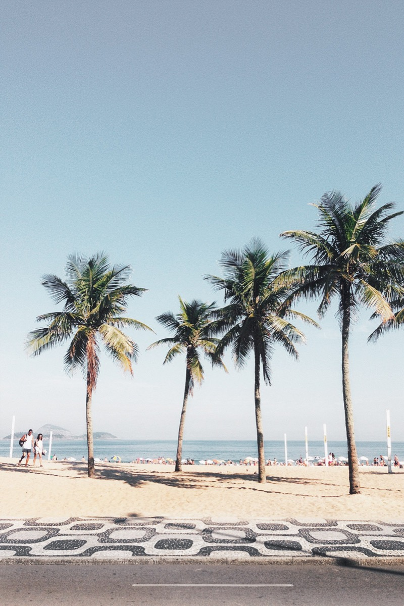 Palm Trees at a beach