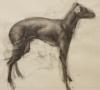 Dog Study 2 by Artist Daniel Ochoa></a><br><hr></div><div><a href=