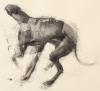 Dog Study 3 Artist Daniel Ochoa