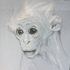Infant Monkey Drawing Artist Chris Leib