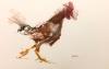 Rooster Study 3-14-17 Artist Daniel Ochoa