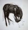 Horse Study 12-04-17 Artist Daniel Ochoa
