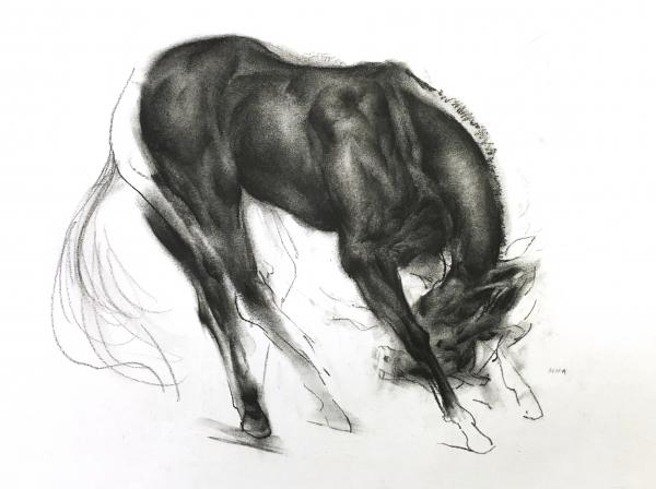 Horse Study 2-12-17 by Artist Daniel Ochoa