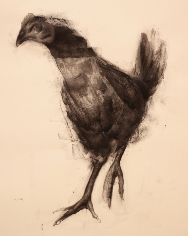 Young Chicken by Artist Daniel Ochoa