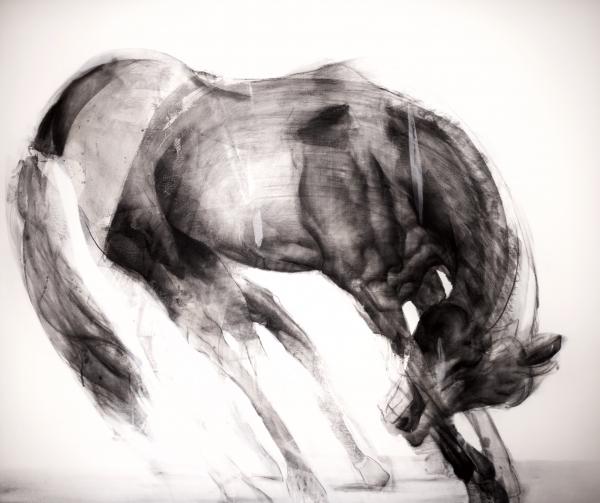 Horse Study 7-6-18 by Artist Daniel Ochoa