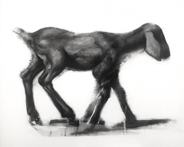 Goat Study 8-9-17 by Artist Daniel Ochoa